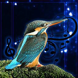 Birds Sound Effects 240x320 Keypad Free Nokia N79 Java App