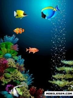 Animated Fish Free 240x320 Wallpaper Download Download