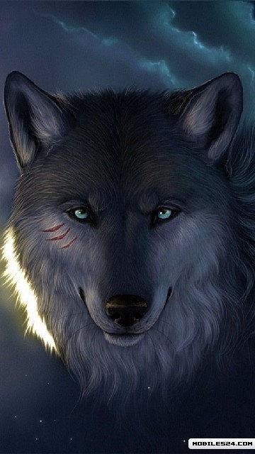 Wolf Free Nokia N8 Wallpaper download - Download Free Wolf