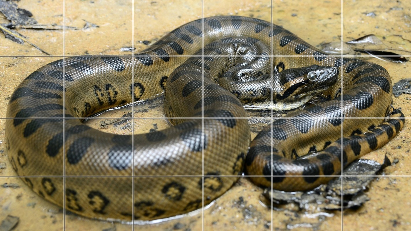 Anaconda Puzzle Game Free Android Game download - Download
