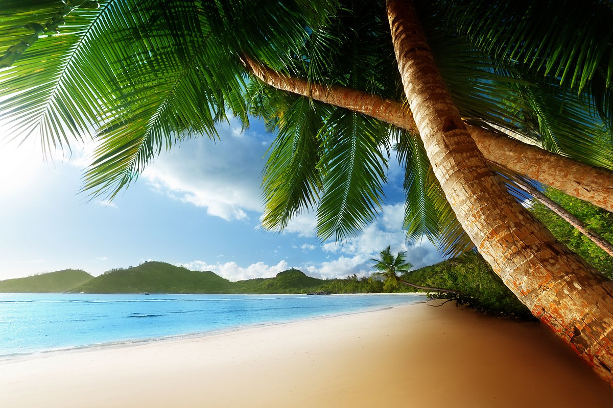 caribbean beach free wallpaper download   download free