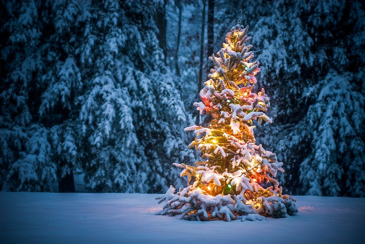Snow Covered Christmas Tree Free Wallpaper download ...