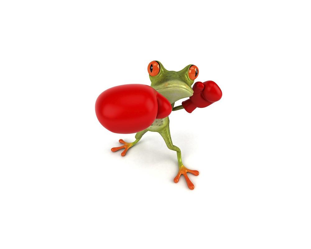 Boxing Frog Free Wallpaper Download