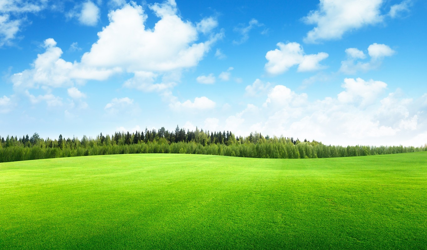 Beautiful field of grass free wallpaper download for Pretty grass