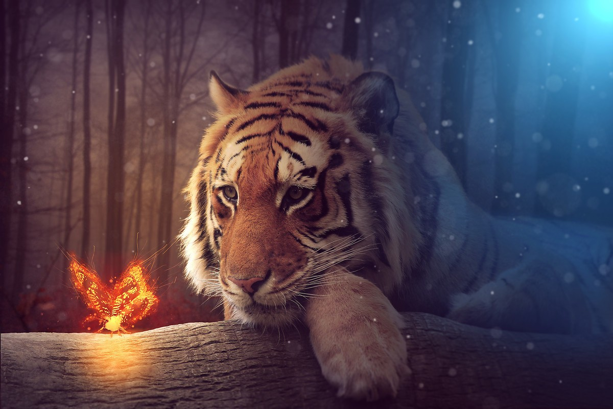 Magical Tiger And Butterfly Free Wallpaper Download Download Free