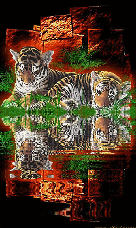 tiger 1 live wallpaper free android live wallpaper