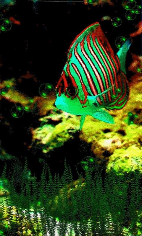 Коралловые Рыбки 3D Живые Обои - cкачать на телефон бесплатно. Коралловые Рыбки 3D Живые Обои на Андроид