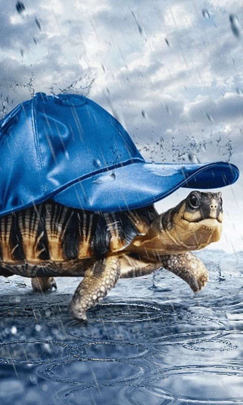 funny turtle live wallpaper free android live wallpaper