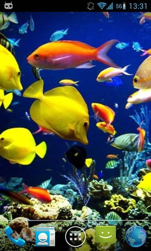Fish aquarium live wallpaper free android live wallpaper for Fish tank live wallpaper