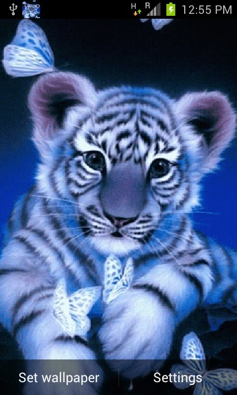 Blue Baby Tiger Live Wallpaper Free Android Live Wallpaper