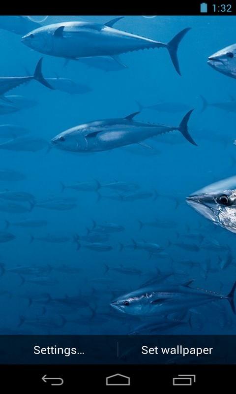 Bluefin Tuna Live Wallpaper Free