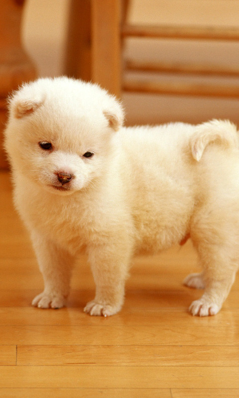 cute puppy wallpapers Free Android Live