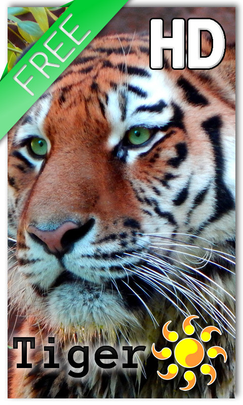 Tiger Live Wallpaper Free Android Download