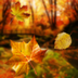 Autumn Live Wallpaper App Icon