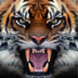 Tiger Live Wallpaper App Icon