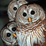 Owls Wallpapers Icon