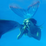 Beautiful Underwater Images Icon