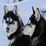 Snow Dogs Icon