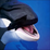 Orca Wallpapers HD Icon