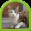 Cat Puzzle Icon