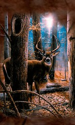Beautiful Deer Live Wallpaper