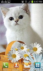 White Cat Live Wallpaper