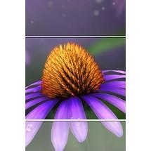 Daisy Lock Screen iP4