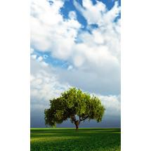 Tree On Valley