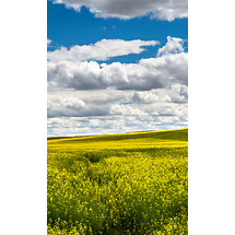 Nokia Lumia 520 Wallpapers - Download wallpapers to your mobile