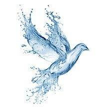 Abstract Water Bird