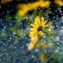 Rain Wallpapers Download Wallpapers To Your Mobile Phone Tablet