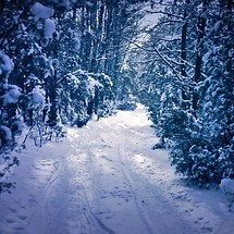 Winter Trail
