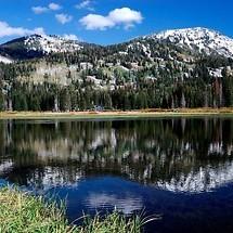 Mountain Lake Trees