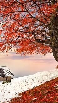 Autumn Winter