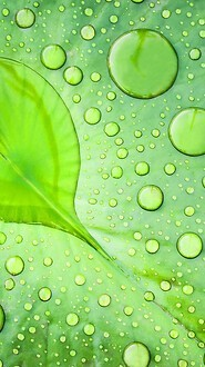 Heart Water Drop On Leaf