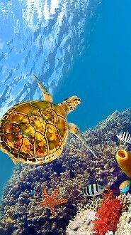 Underwater Sea Turtle