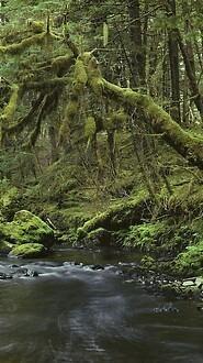 Peaceful Forest, Southeast Alaska