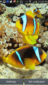 Clownfish In Water Live Wallpaper