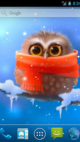 Funny Owl Live Wallpaper