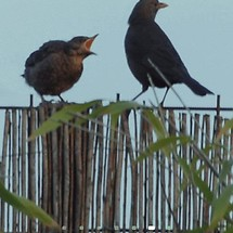 Birds on the Fence LWP
