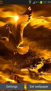 Golden Pigeon Live Wallpaper