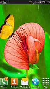 Butterfly On Flowerr LWP