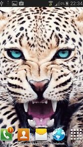 Roaring Leopardd LWP