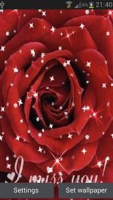 Red Rose Star LWP