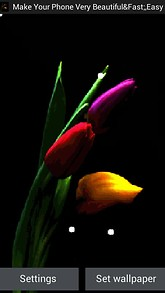 Colorful Tulip Flower LWP