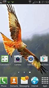Rainy Eagle Live Wallpaper