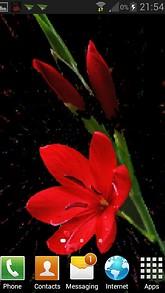 Red Flower Branch LWP