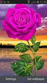 Snowy Pink Rose LWP