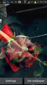 Falling Red Rose LWP
