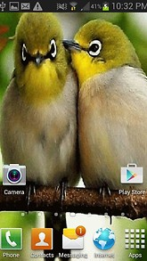 Cute Love Birds LWP